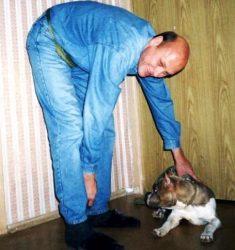 Американский стаффордширский терьер Рокки, 4м. Проблема нечистоплотность, агрессия