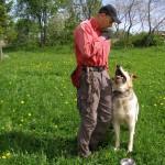 Могучий и очень энергичный - дворовый пес Арчи