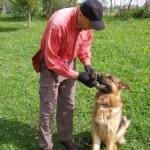 Верный службист - немецкая овчарка Эрик