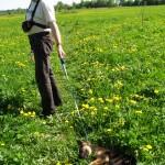Щенок немецкой овчарки - Риксон - дрессировать или  воспитывать?