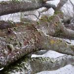 Могучее дерево упало поперек нашей дрессировочной площадки