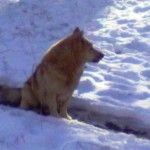 Дворняжка сидит на протоптанной в снегу тропинке