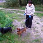 Владелица такс выгуливает собак на пустыре