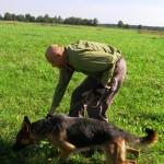 Немецкая овчарка, Ума идет по следу человека