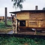 немецкая овчарка, Фриц выставлен на блок-пост, а его любимая коза сидит в его будке