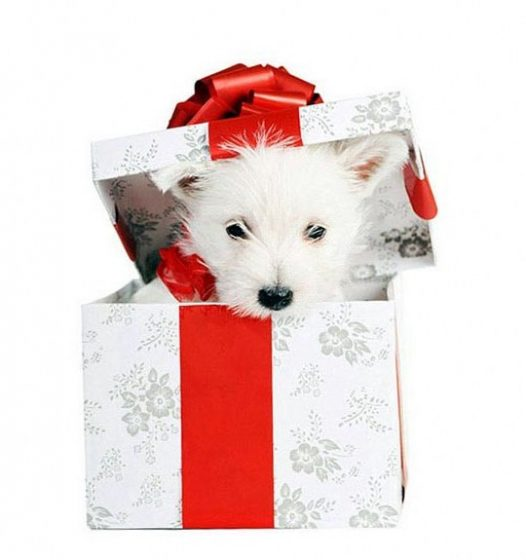 Собака в подарок