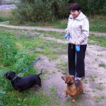 Владелица такс с двумя собаками на прогулке