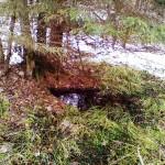 В лесу еще остался снег