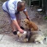 Владелец со своими двумя собачками
