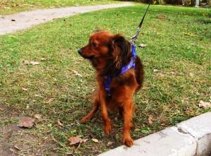 Собака бросалась на проходящего мимо пса