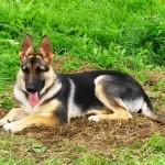 Что это еще за Типология собак?