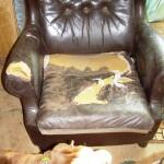 Это кресло стало местом для отдыха Тайсона в загородном доме
