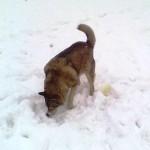 Дворняжка - прародитель всех пород собак