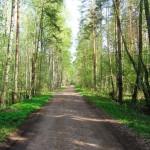 По дороге к поселку Старая Касколовка