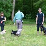 Движение вокруг других собак