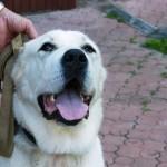 Нора стала ласковой собакой