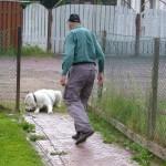Укладка собаки с наружной стороны калитки