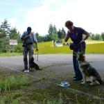 Установление зрительного контакта с собакой