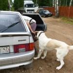 Лезу в автомобиль первым, показывая Норе пример