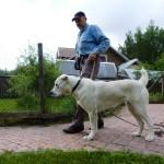Среднеазиатская овчарка Нора. Первый вывод собаки из вольера.