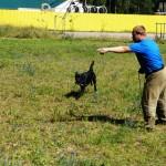 Обучение лабрадора Джека челночному ходу - посыл собаки налево