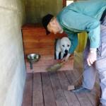 В наших вольерах используется только одна чашка для кормления и поения собак