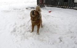 Собака на цепи - нет зрелища более печального