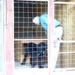 Варг - Ешь - собака выходит из будки и подходит ко мне