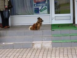 В ожидании владельца