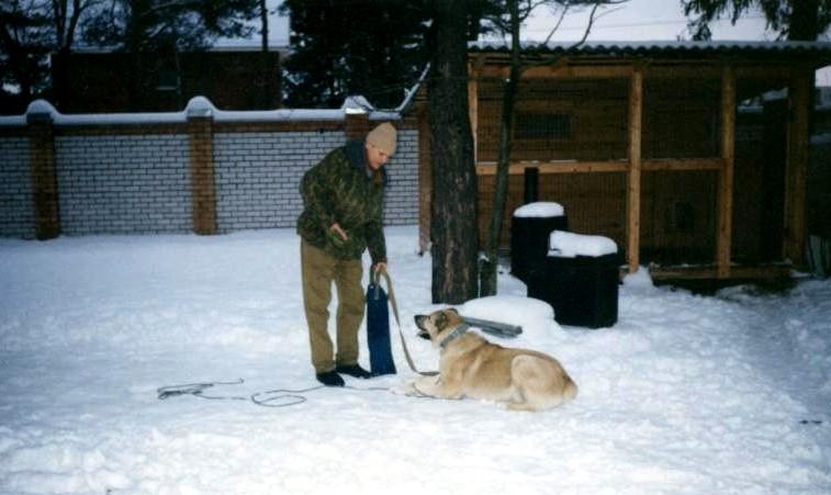 Стандартный уличный вольер рекомендованный учебником служебного собаководства - абсолютно непригоден для содержания собак!