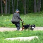 Владельцу трудно, но он не спускает собак с поводка