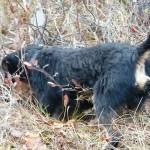 У Шварца в лесу проснулся инстинкты охотника