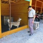 Восточно-сибирская лайка Бейси готова к обучению