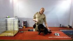 Как приучить собаку к расческе и расчесыванию шерсти