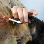 Чистка зубов у собаки