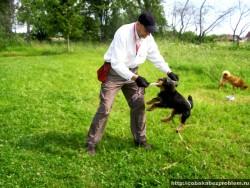 Ухватка - пример положительного подкрепления для собаки