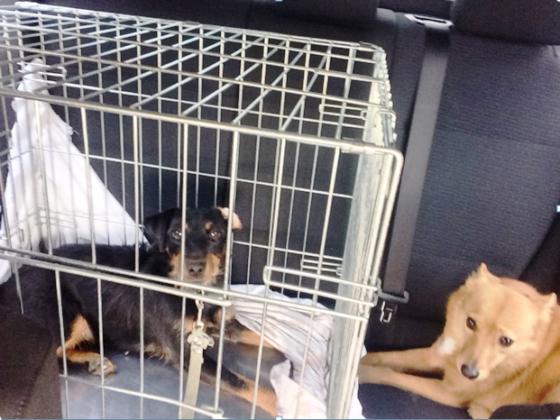 Люмия и Пурга в машине в длительной поездке