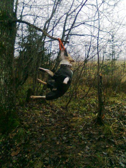 Висит на ветках дерева - 2