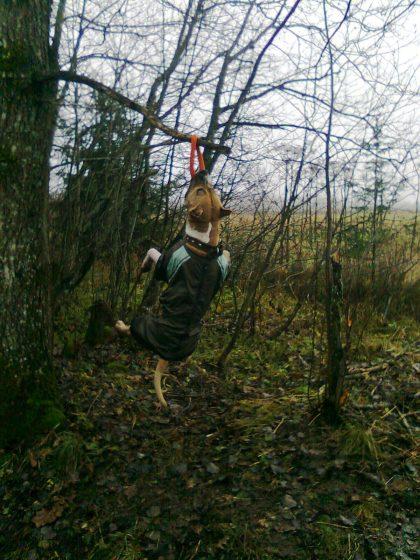 Висит на ветках дерева