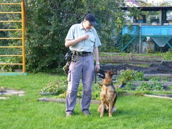 Дрессировка немецкой овчарки Зафи