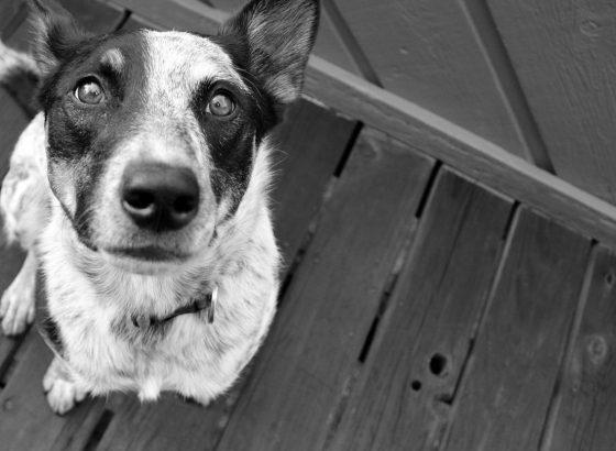 Как научить собаку команде Сидеть