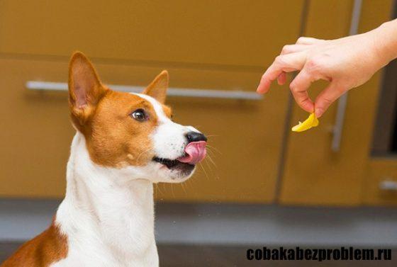 Положительное подкрепление в дрессировке собак