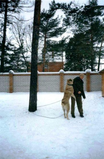После передачи собаки владельцу, Сурхан перестал меня слушаться