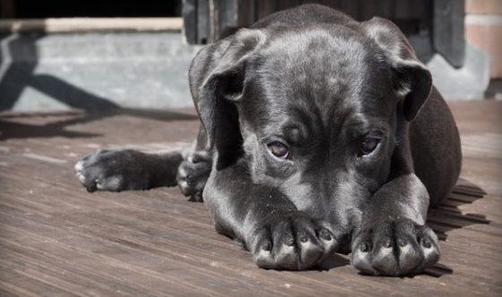 Разве можно наказывать беззащитных щенков, не испытывая угрызений совести?