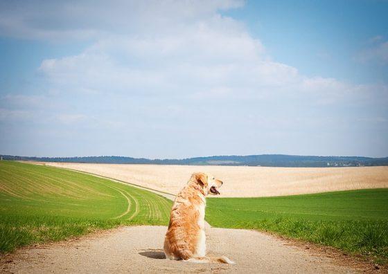 Как гулять с собакой в жару