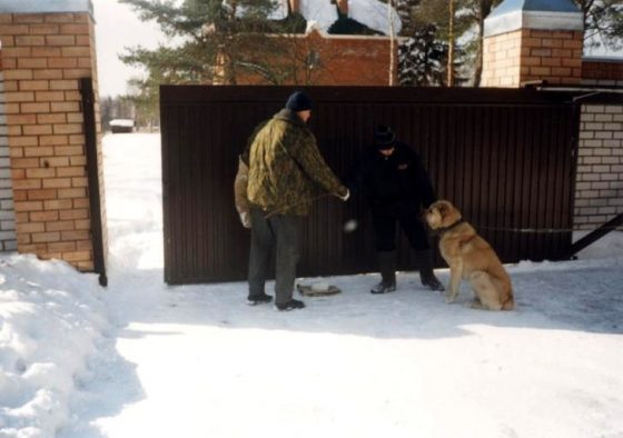 Управление защитной собакой - не доверяй постороннему и не нападай без причины