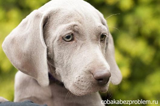 Отрицательное подкрепление в дрессировке собак