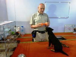 Начальная дрессировка собаки начинается в доме или в вольере