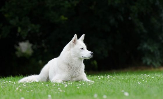 Как научить собаку лежать длительное время по команде