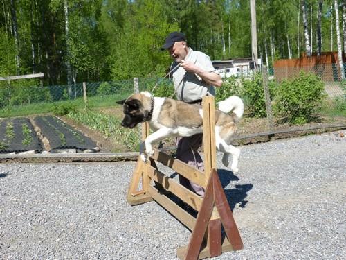 Как обучать собаку. Как найти дрессировщика собак